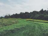 Shelburne Farms, Shelburne, VT (08/15/15)