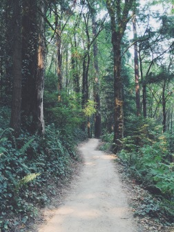 Wildwood Trail, Washington Park, Portland, OR (08/23/2015)