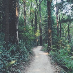 Wildwood Trail, Washington Park, Portland, OR (08/23/2015)
