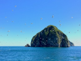 A flock of gulls takes off from the Chiswell Islands in Kenai Fjords National Park